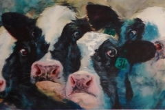 FOUR HOLSTEINS - 20 X 36 - WATERCOLOR - $450