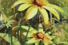 DAISY GOLD - 22 X 18 - WATERCOLOR - $300
