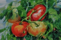FOUR TOMATOES - 22 X 29 - WATERCOLOR - $300