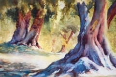 ANCIENT OLIVE TREES - 22 X 29 - WATERCOLOR - $400
